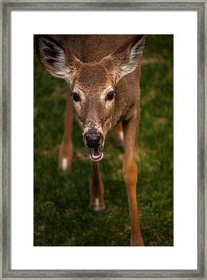 Lets Talk Framed Print