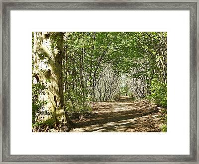 Lets Walk Framed Print by Betty-Anne McDonald