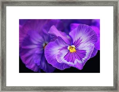 Letters To Violet Framed Print