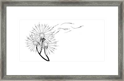 Letting Go Being Free Framed Print by Aiden Galvin