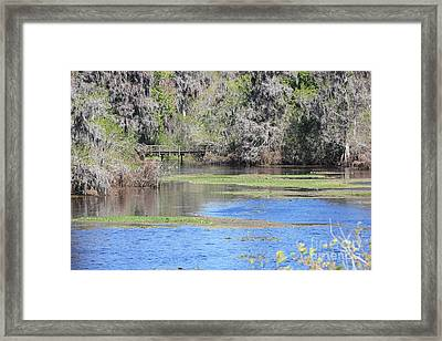 Lettuce Lake With Bridge Framed Print by Carol Groenen
