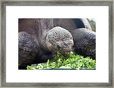 Framed Print featuring the photograph Lettuce Makes You Strong by Miroslava Jurcik