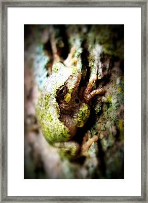 Leveli Beka Ketto Framed Print by Scot Johnson
