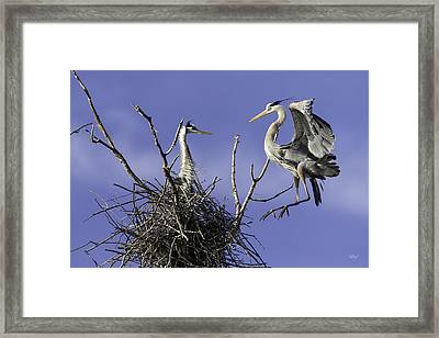 Levitation Framed Print by Everet Regal
