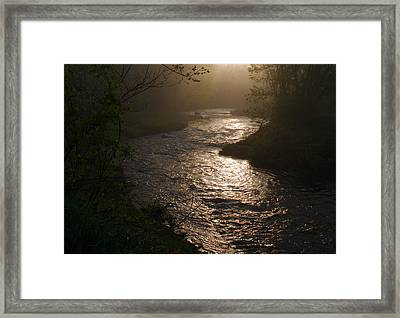 Lewis Creek In Morning Fog Framed Print by Bill Driscoll