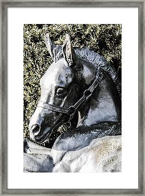 Lexington Foal Framed Print