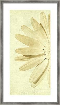 Lh Daisey Framed Print by Jim  Hatch