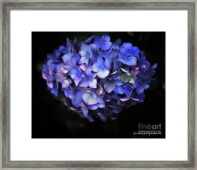 l'Hortensia bleu Framed Print