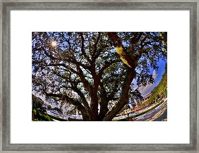 Liberty Oak Harbour Town Hilton Head Sc Framed Print