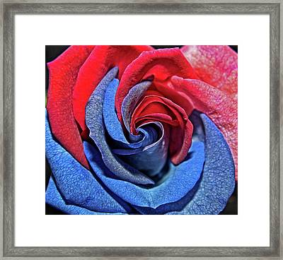 Framed Print featuring the photograph Liberty Rose by Judy Vincent