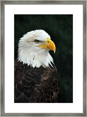 Liberty Three Framed Print by Teresa Blanton