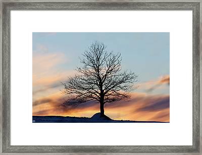 Liberty Tree Sunset Framed Print