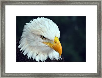 Framed Print featuring the photograph Liberty Watching by Teresa Blanton