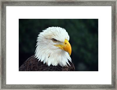 Framed Print featuring the photograph Liberty Watching Two by Teresa Blanton