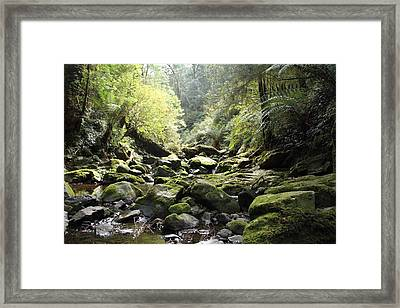 Lichen And Moss 2 - Nature Framed Print by Virginia Halford