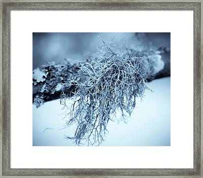 Lichen 1207 Nature Abstract Framed Print