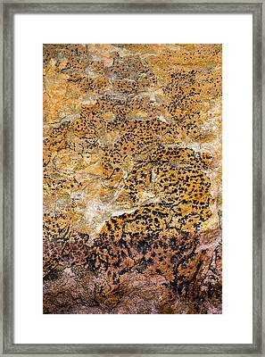 Lichen Abstract, Bhimbetka, 2016 Framed Print by Hitendra SINKAR
