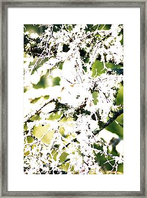 Lichen Abstract Framed Print