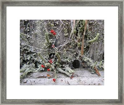 Lichen And Old Fence #1 Framed Print