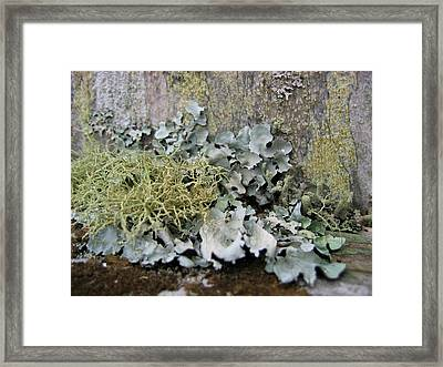Lichen And Old Fence #2 Framed Print