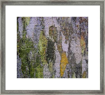 Lichen And Old Fence #4 Framed Print