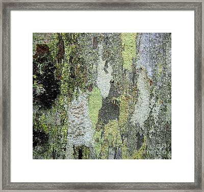 Lichen And Old Fence #5 Framed Print