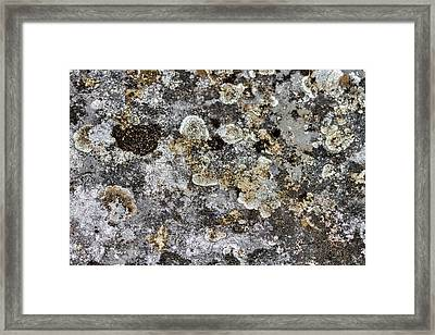 Framed Print featuring the photograph Lichen At The Cemetery by Stuart Litoff