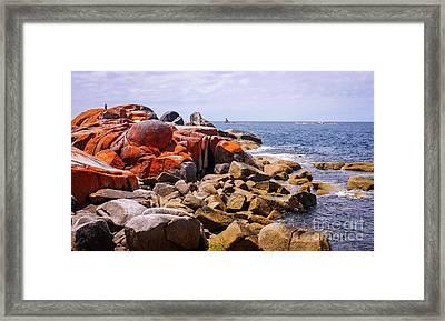 Lichen Covered Rocks Bay Of Fires Framed Print