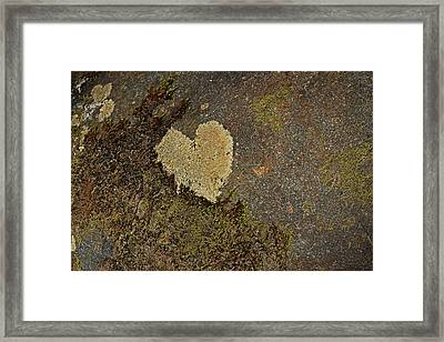 Lichen Love Framed Print by Mike Eingle