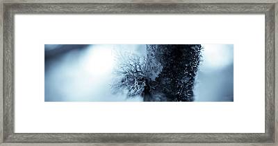 Lichen Macro 1206 Nature Abstract Framed Print