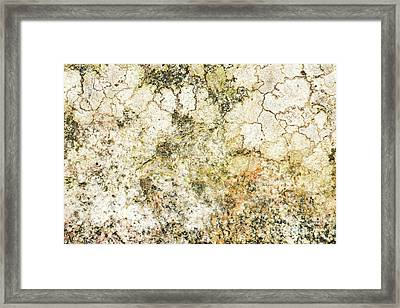 Framed Print featuring the photograph Lichen On A Stone, Background by Torbjorn Swenelius