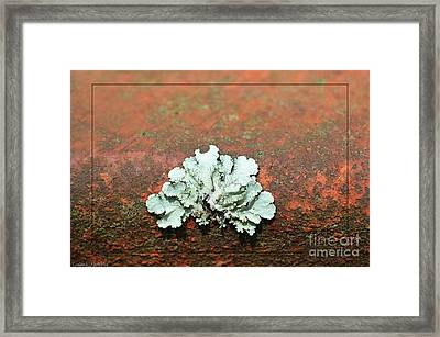 Lichen On Rust Framed Print by Debbie Portwood