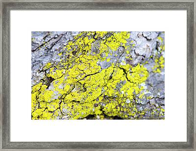Framed Print featuring the photograph Lichen Pattern by Christina Rollo