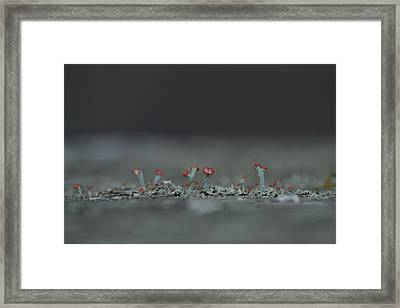 Lichen-scape Framed Print by JD Grimes