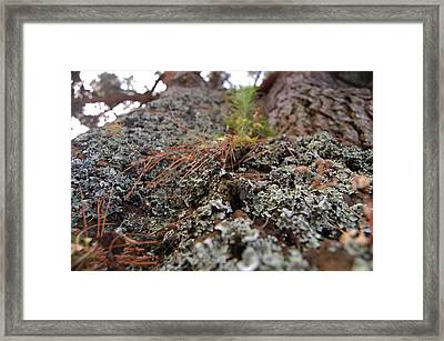 Lichen Tower Framed Print by Jean Booth