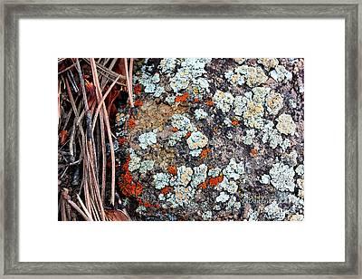Lichen With Pine Framed Print