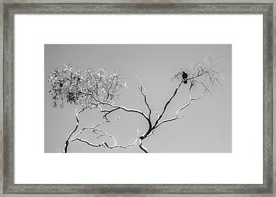 Life And Death Framed Print