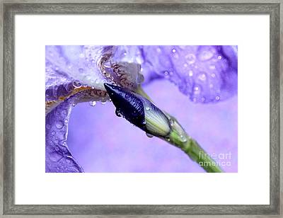 Life Awaits Framed Print by Krissy Katsimbras