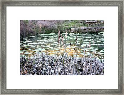 Life Begins Again Framed Print by Kristin Elmquist