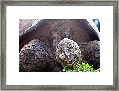 Framed Print featuring the photograph Life Begins At 60 For Vegetarian by Miroslava Jurcik