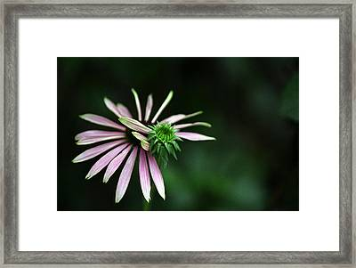 Framed Print featuring the photograph Life Begins by Wanda Brandon