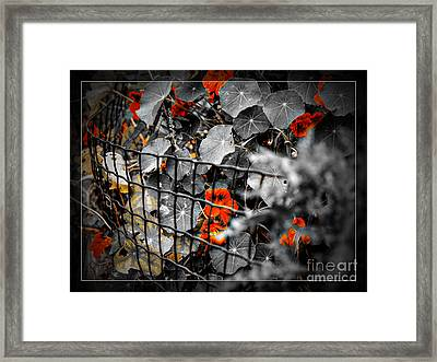Life Behind The Wire Framed Print