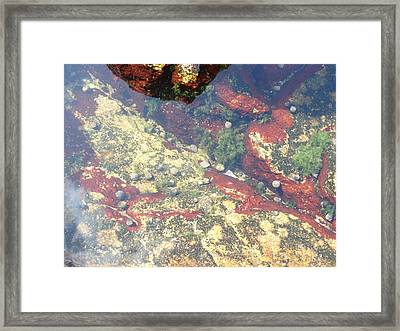 Life Below Framed Print by Clay Peters Photography