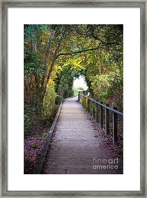 Life Beyond The Path Framed Print