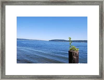 Life Continues Framed Print by Sergey and Svetlana Nassyrov