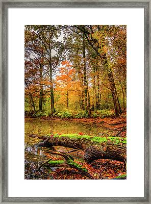 Framed Print featuring the photograph Life Cycle by Dmytro Korol