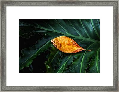 Life Cycle Still Life Framed Print