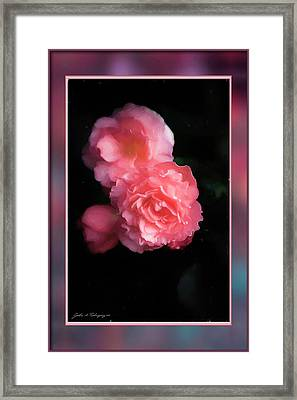 Life Cycles Framed Print