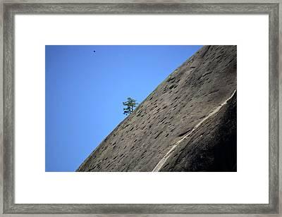 Life Finds A Way Framed Print
