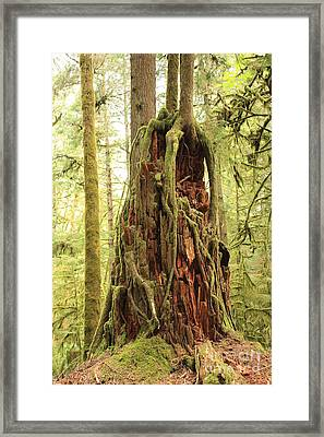 Life Goes On Framed Print by Carol Groenen